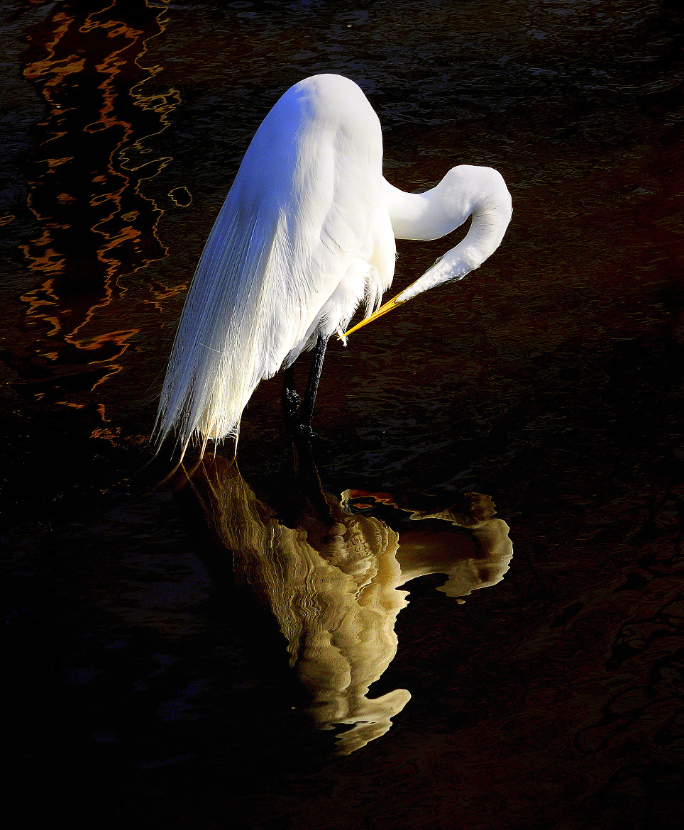 Photograph Egret with reflection by Peter Michael on 500px