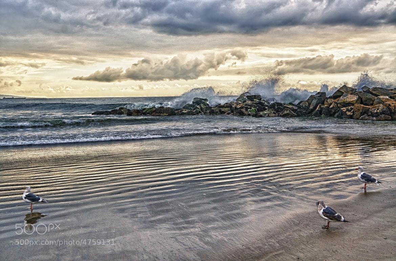 Photograph Venice Beach by Daniel Schwabe on 500px