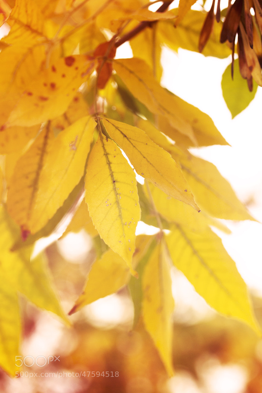 Photograph Yellow by Gabriela Tulian on 500px