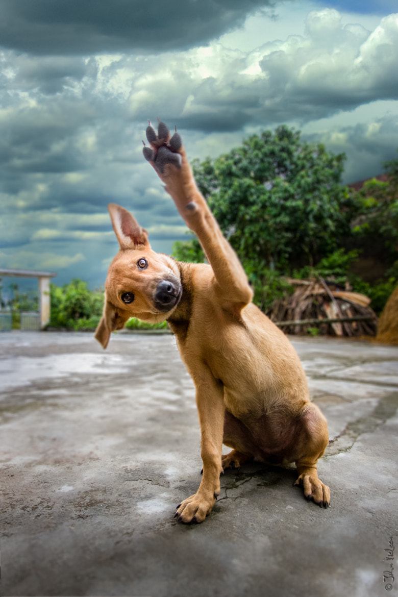 Photograph high five…. or four.. by John Dé Photography on 500px