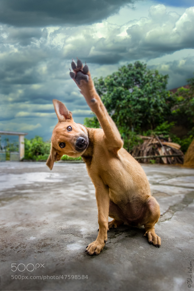 Photograph high five…. or four.. by John Dé Nielsen on 500px