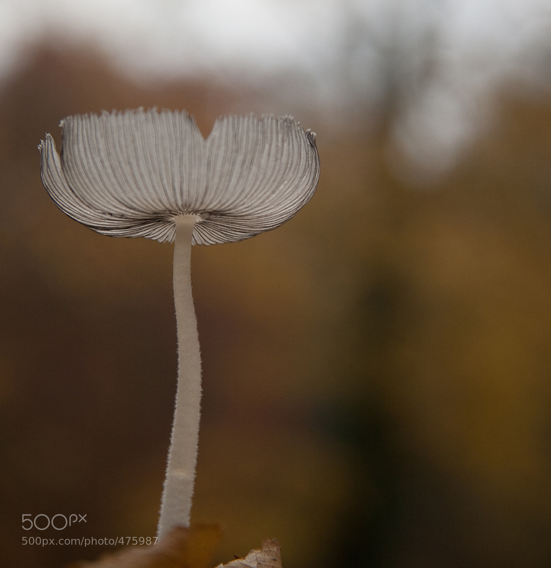 Photograph Little mushroom by Marco de Groot on 500px
