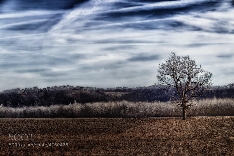 Photograph Dusky Isolation by Bill Tiepelman on 500px