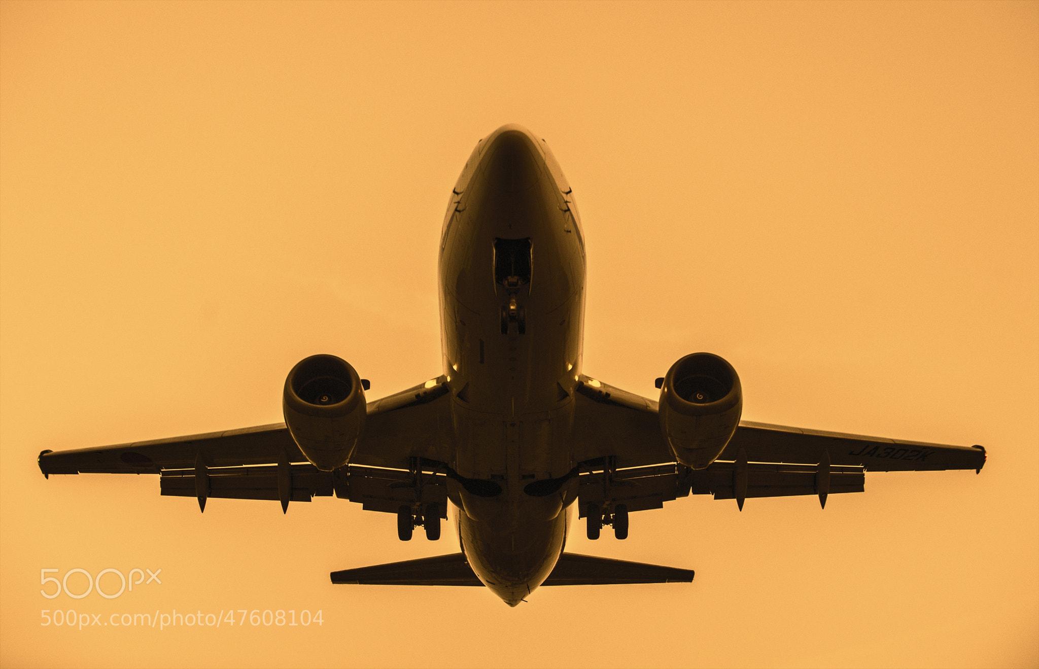 Photograph Sunset Flight by hugh dornan on 500px