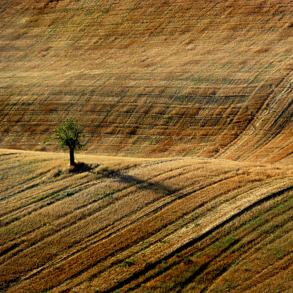 Photograph solitar tree by ivo pandoli on 500px