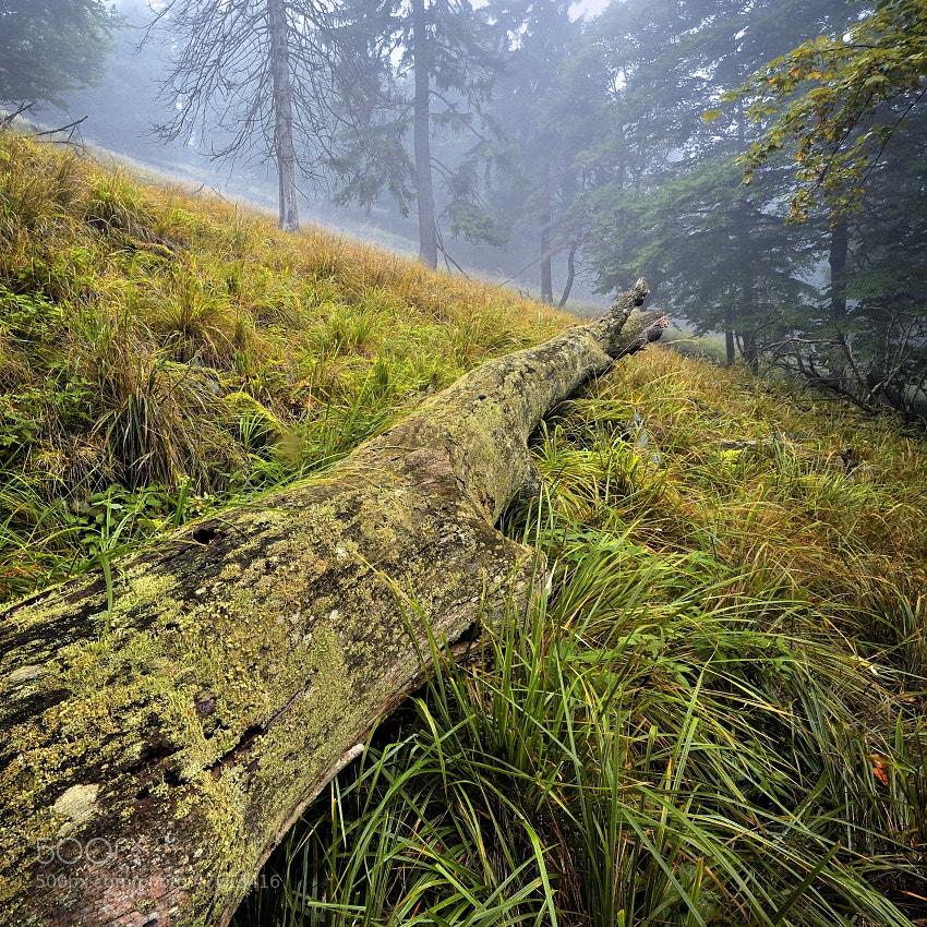 Photograph CZECH SWITZERLAND by Tomáš Morkes on 500px
