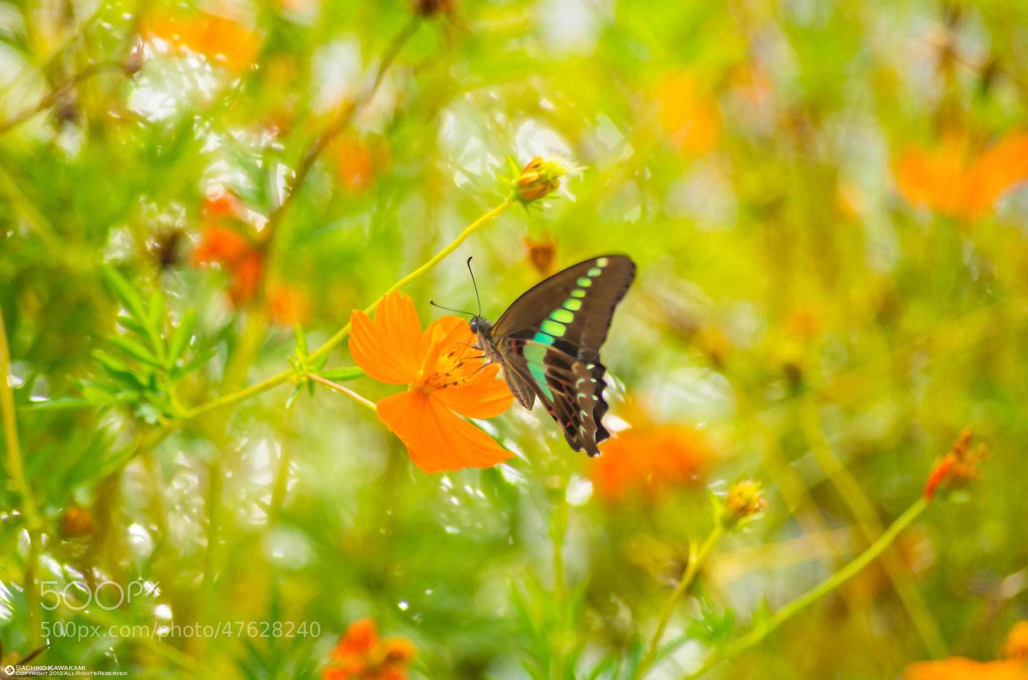 Photograph I fly freely by Sachiko Kawakami on 500px