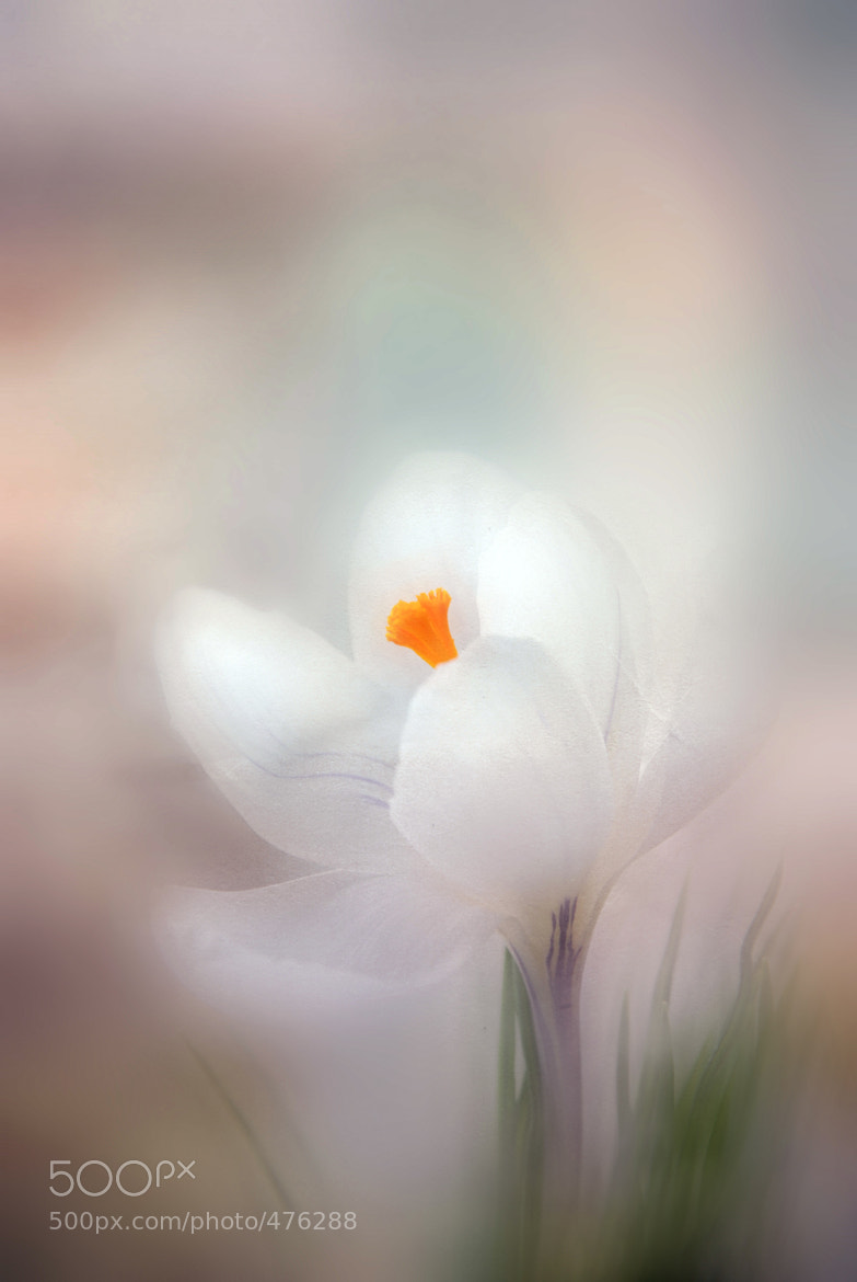 Photograph Blur flower by Evgeniy Lisovoi on 500px