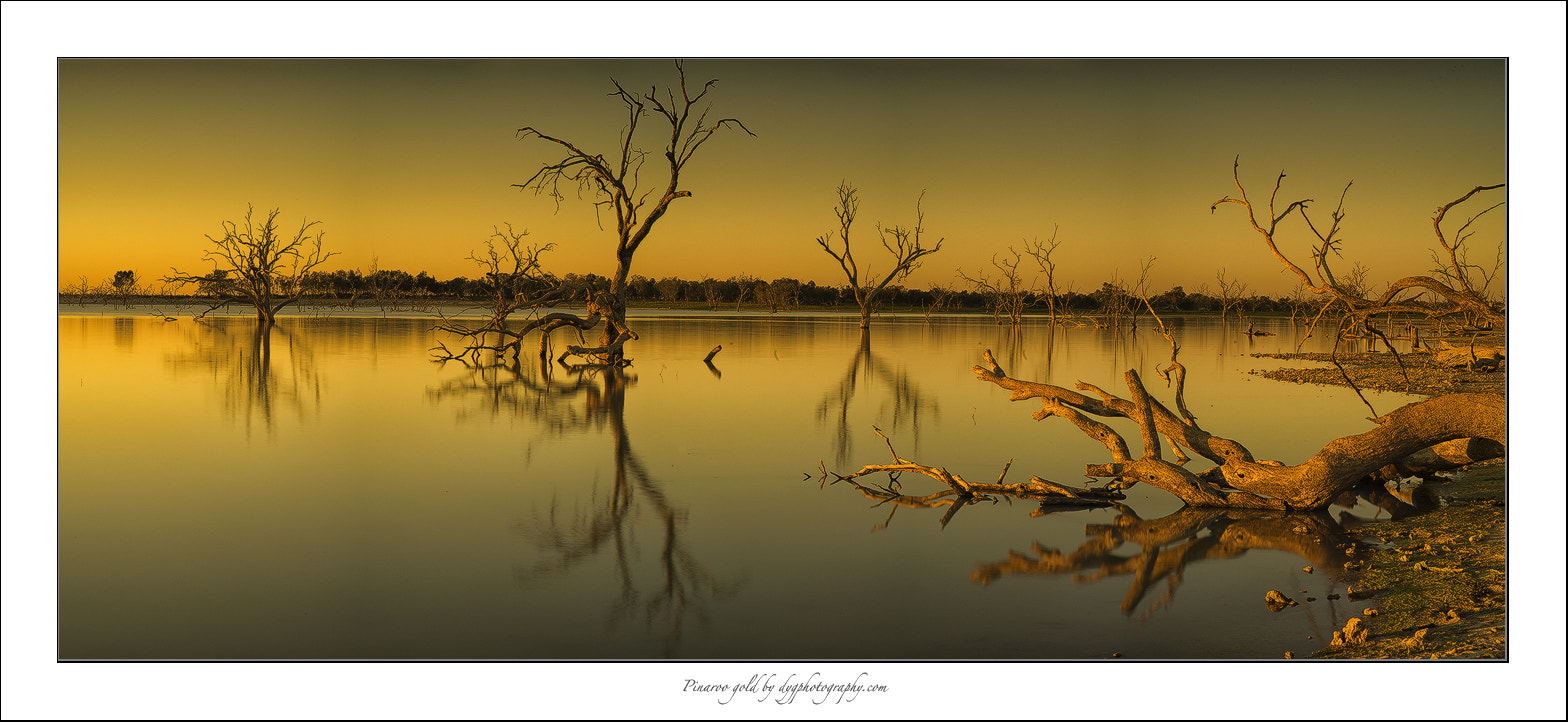 Photograph Lake pinaroo gold by donald Goldney on 500px