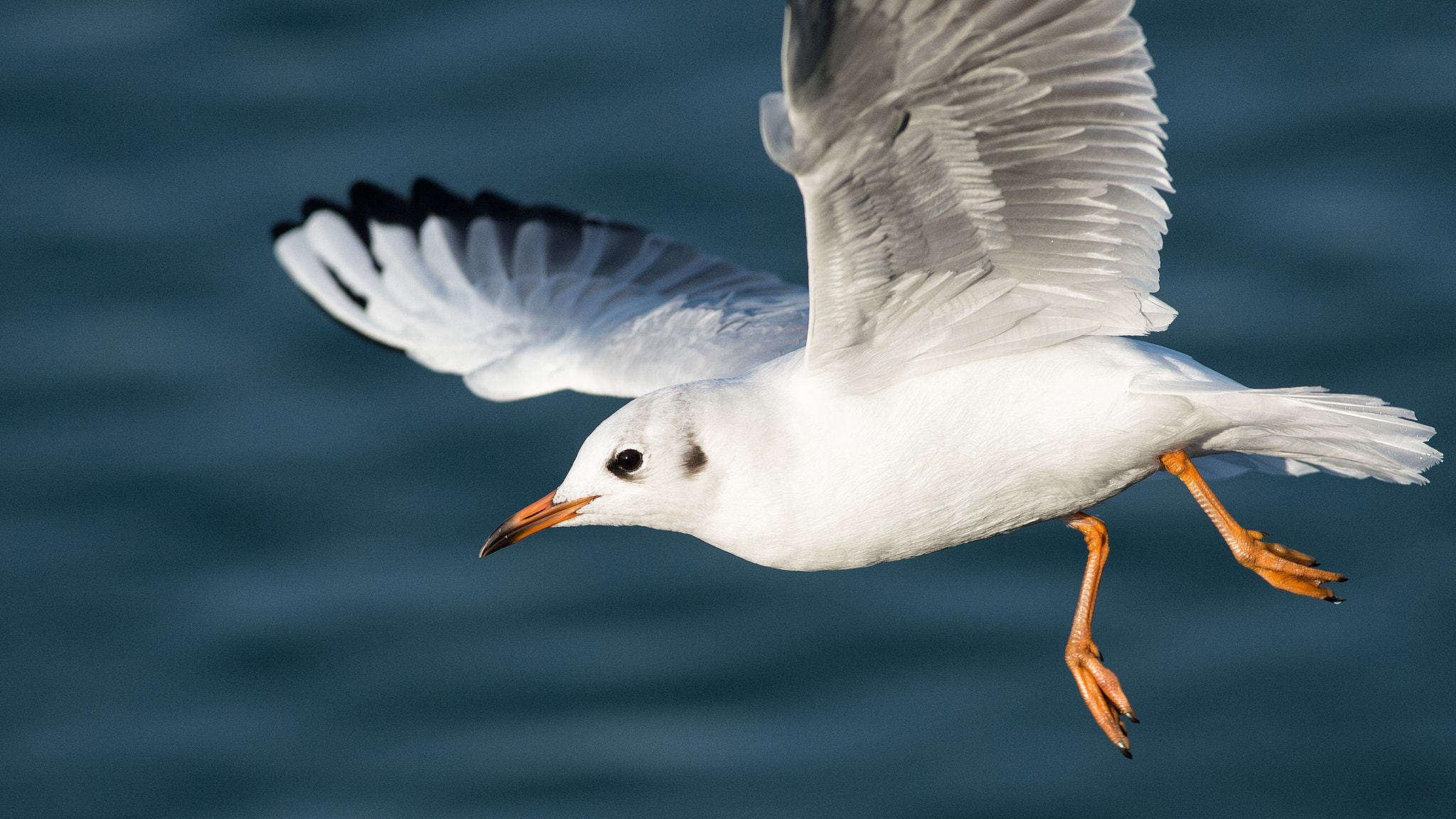 Photograph Möwe Close-Up | Seagull Close-Up by Franz Engels on 500px
