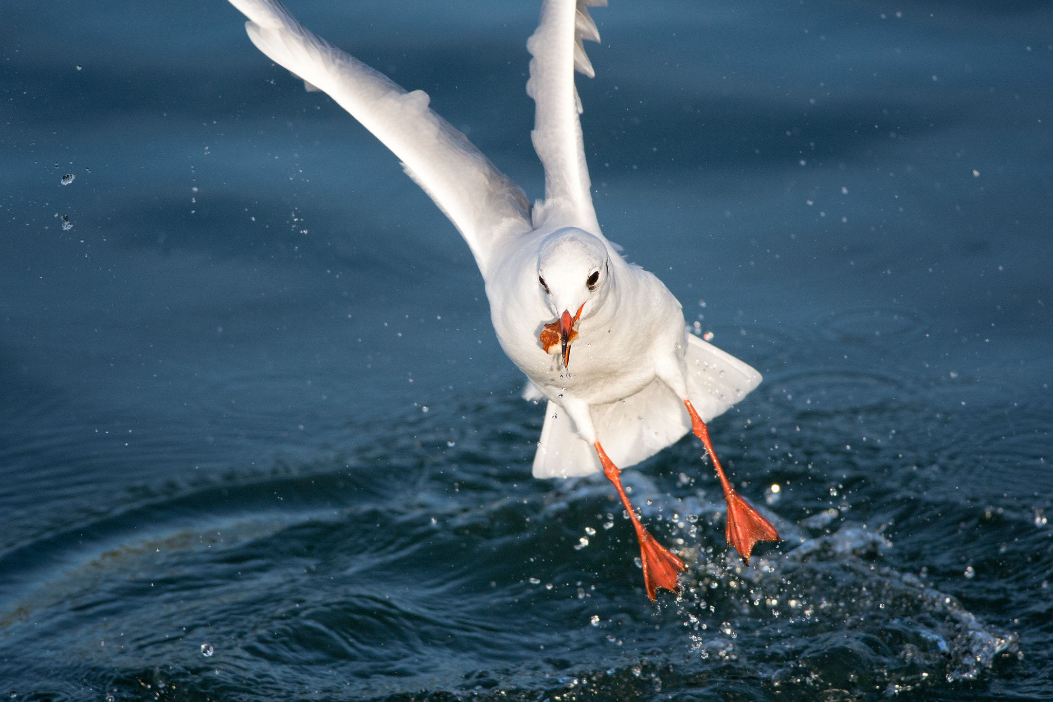 Photograph Hungrige Möwe | Hungry seagull by Franz Engels on 500px