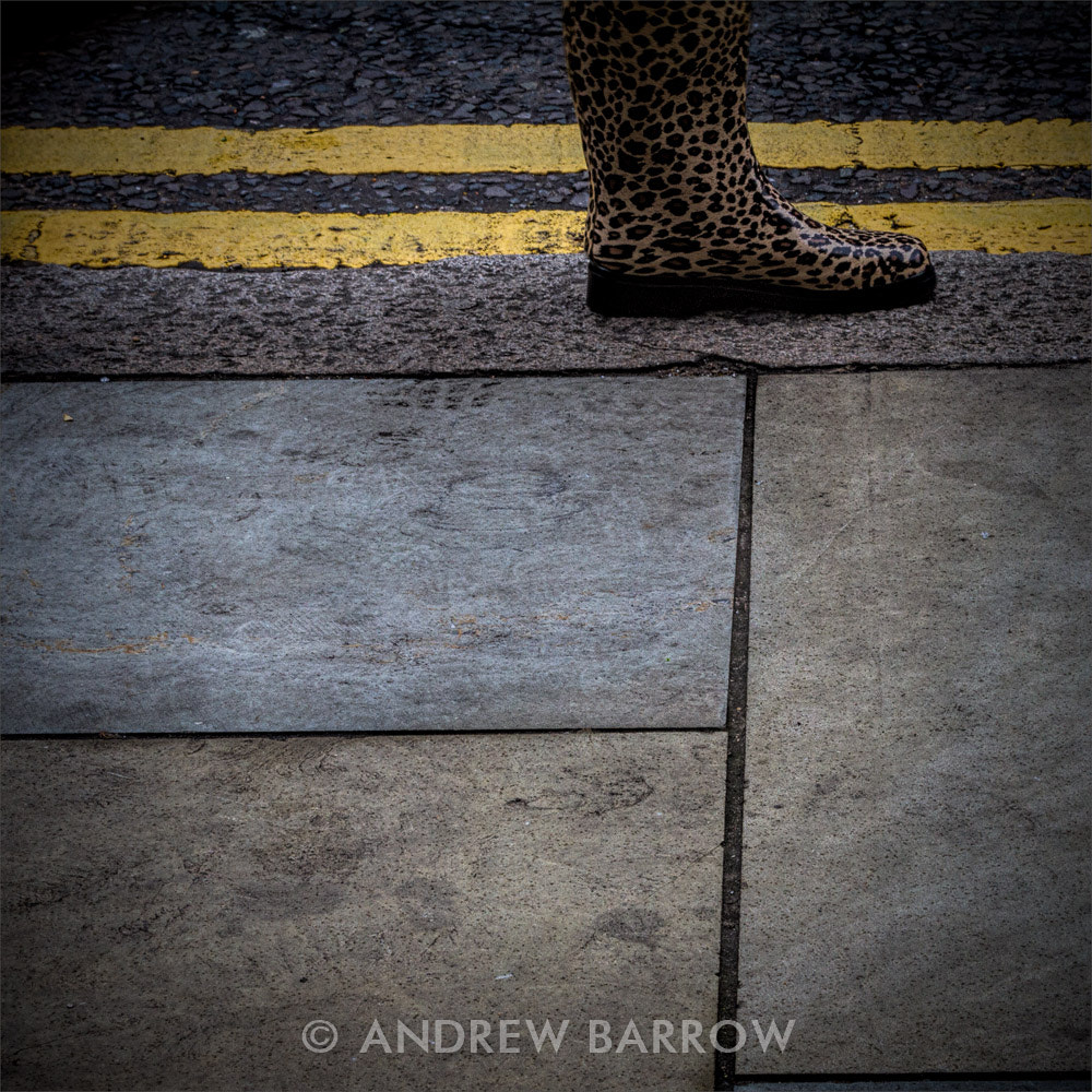 Photograph Urban Leopard by Andrew Barrow ARPS on 500px