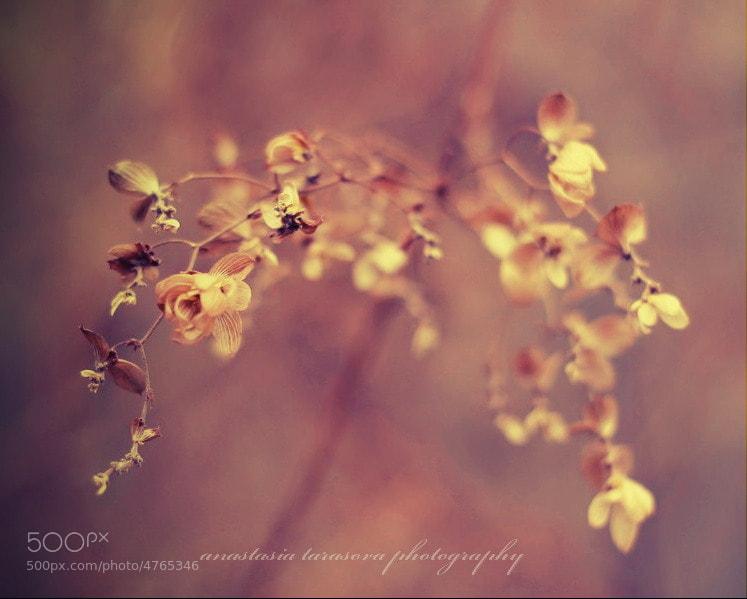 Photograph tenderness by Anastasia  Tarasova on 500px