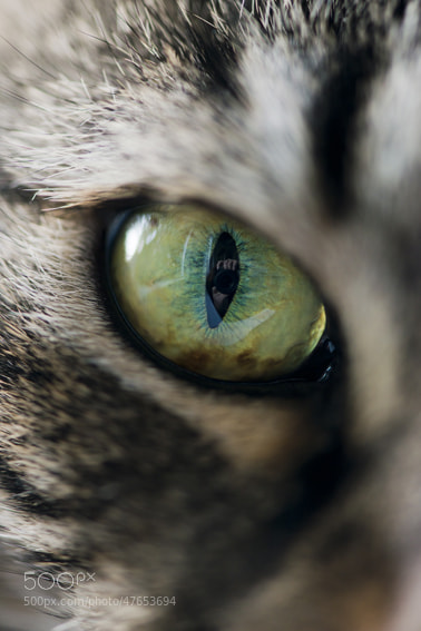 Photograph eye by Barbara Willi on 500px
