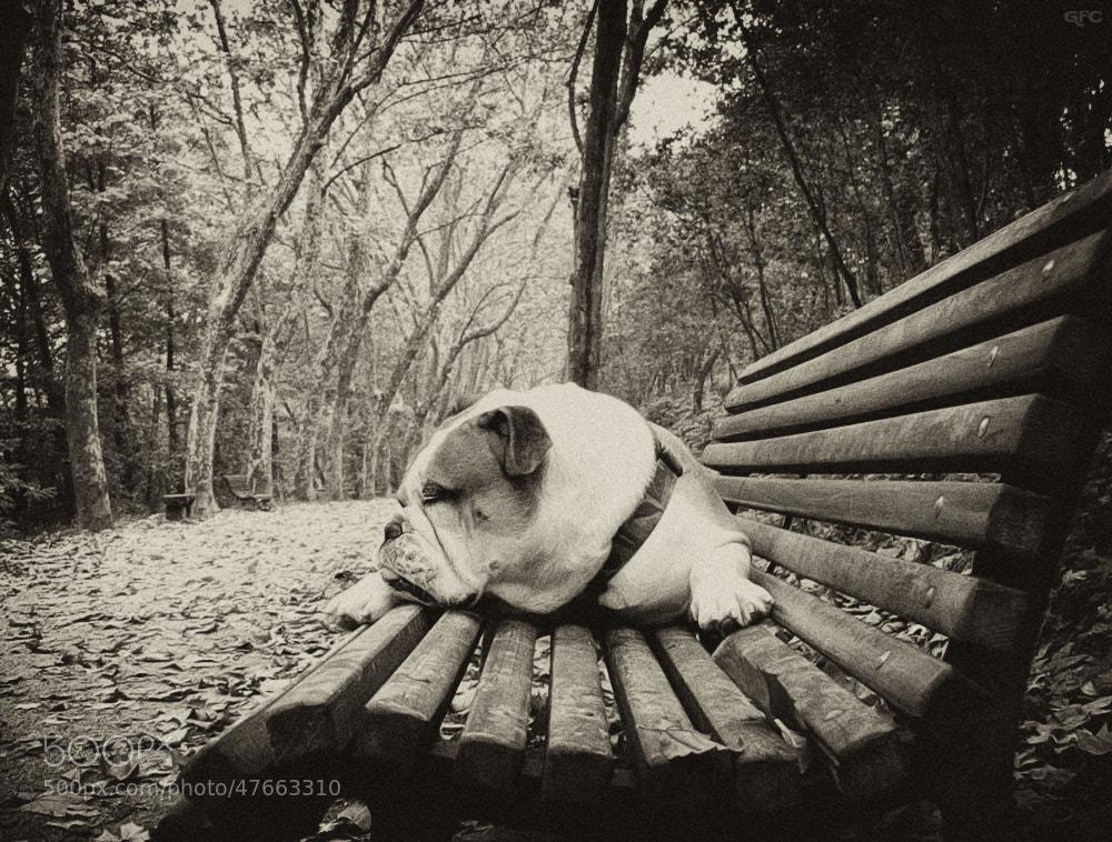Photograph Autumn Dreams by Gemma  on 500px