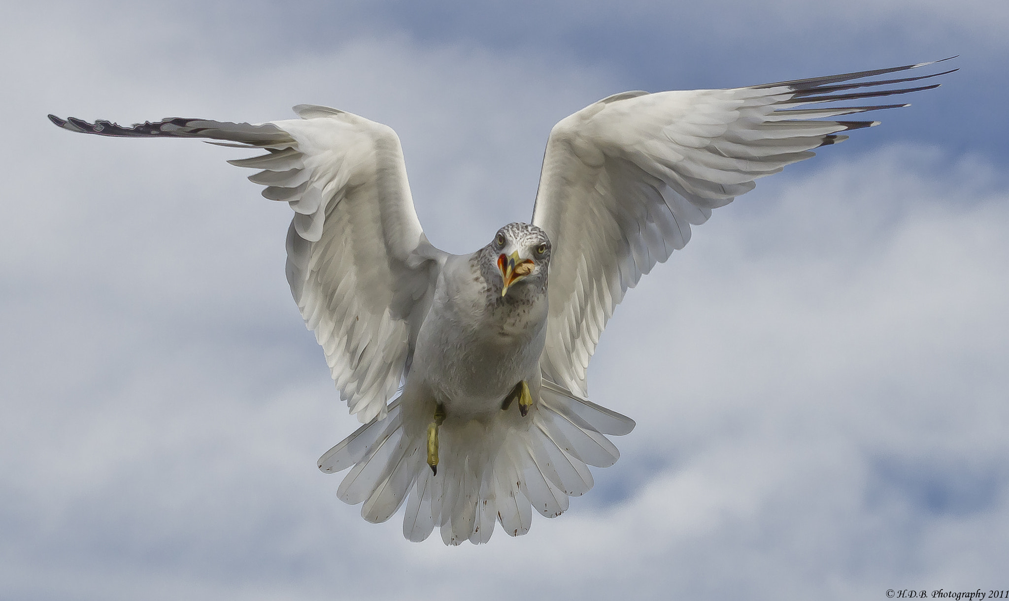 Photograph Happy Gull by Harold Begun on 500px