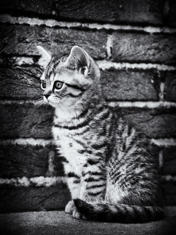 Photograph Fester by Andrea Jancova on 500px