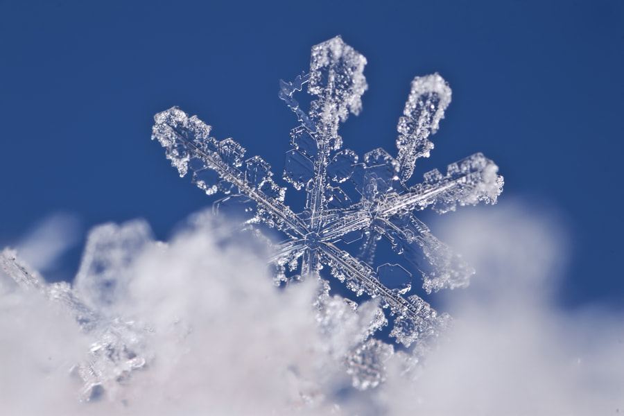 Photograph snowflake by Omid Golzar on 500px