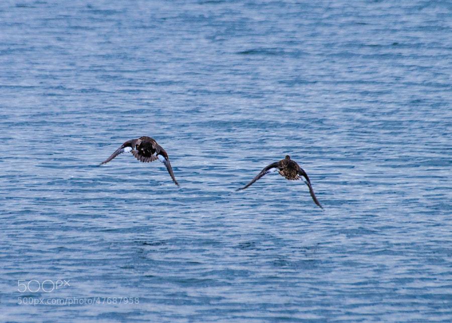 Ducks flying along the Hudson River