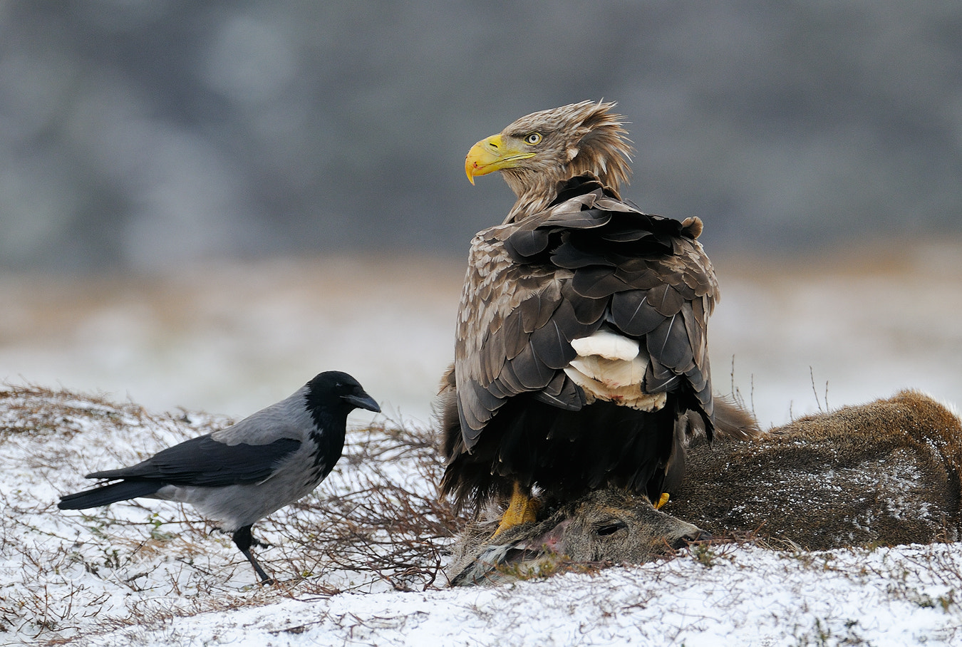 Photograph Nice Company by Harry  Eggens on 500px