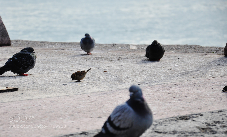 Photograph Birds by Okan Kantemir on 500px