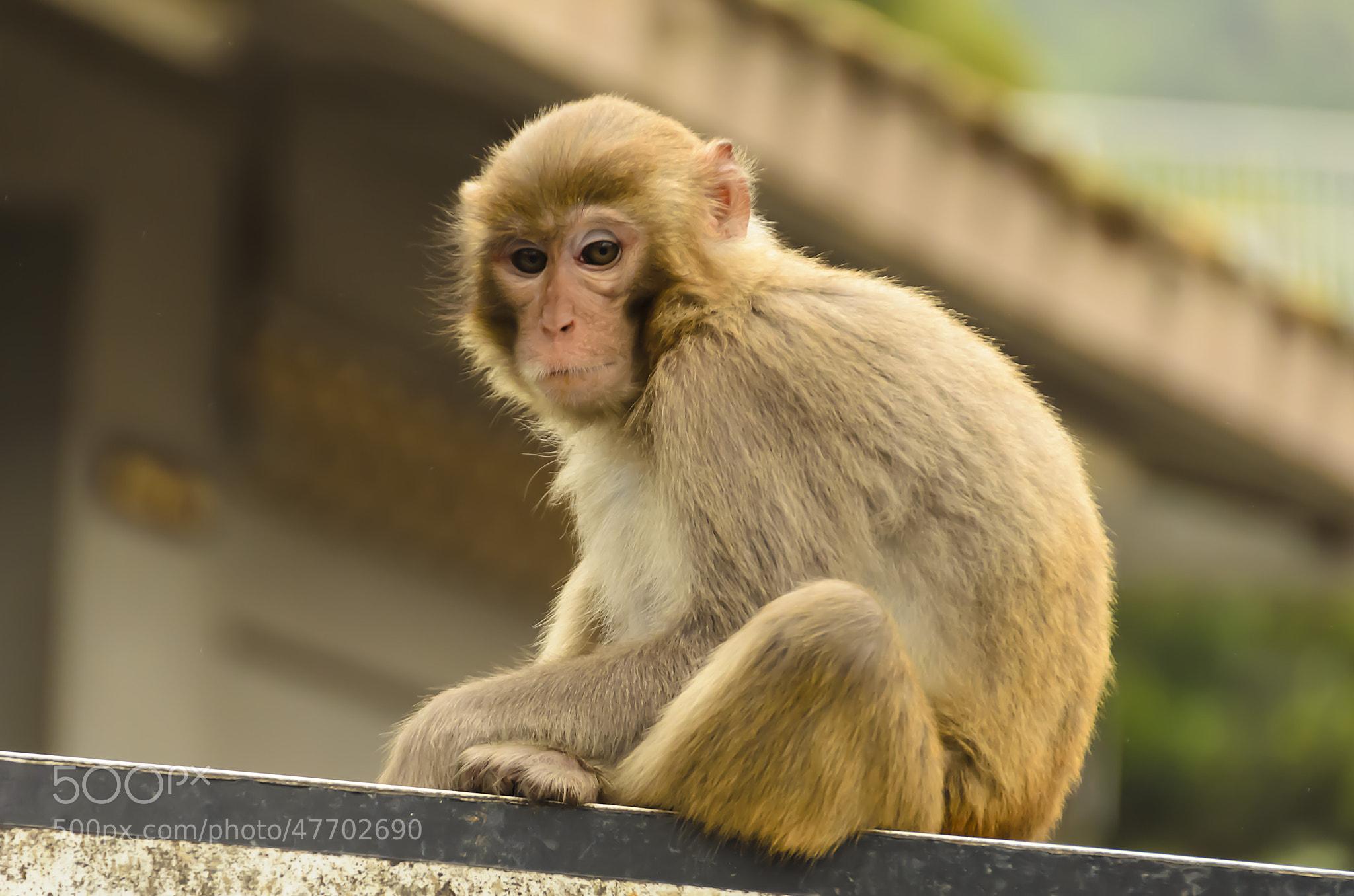 Photograph Hong Kong Macaque by Martijn Barendregt on 500px