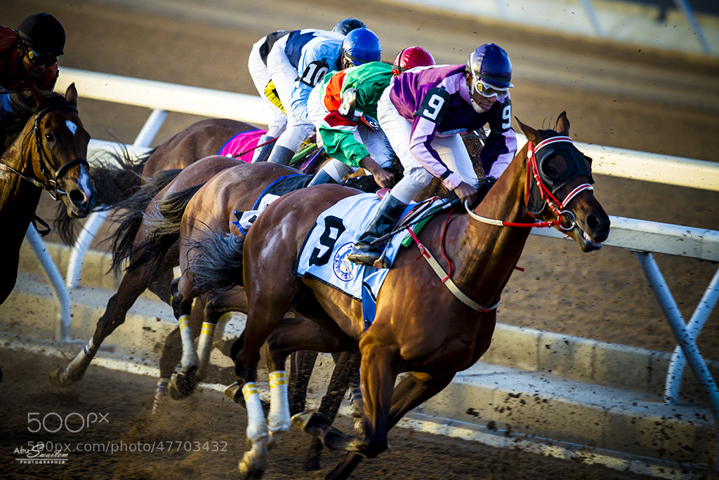 Photograph Horses Turn in by Abu  Swailem on 500px