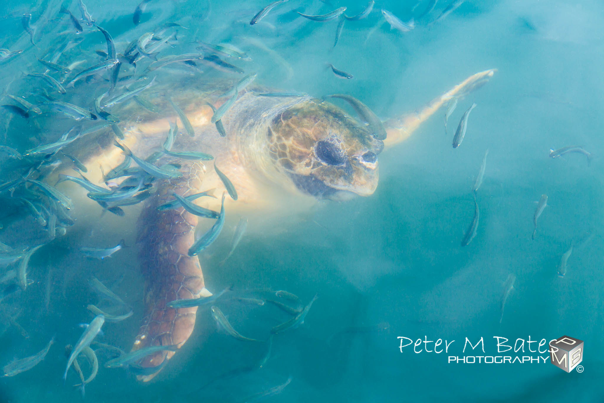 Photograph Swimming Through Traffic by Peter Bates on 500px