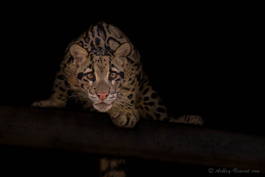 Photograph Prepare for Launch by Ashley Vincent on 500px