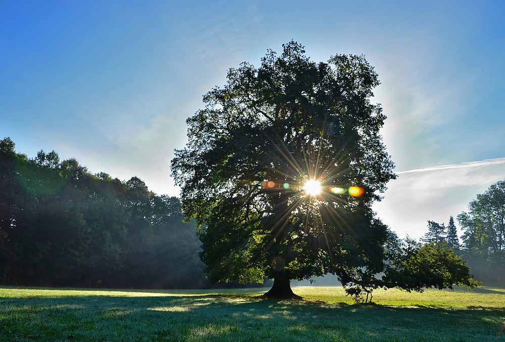 Photograph tree in the morning by Silvio E. on 500px