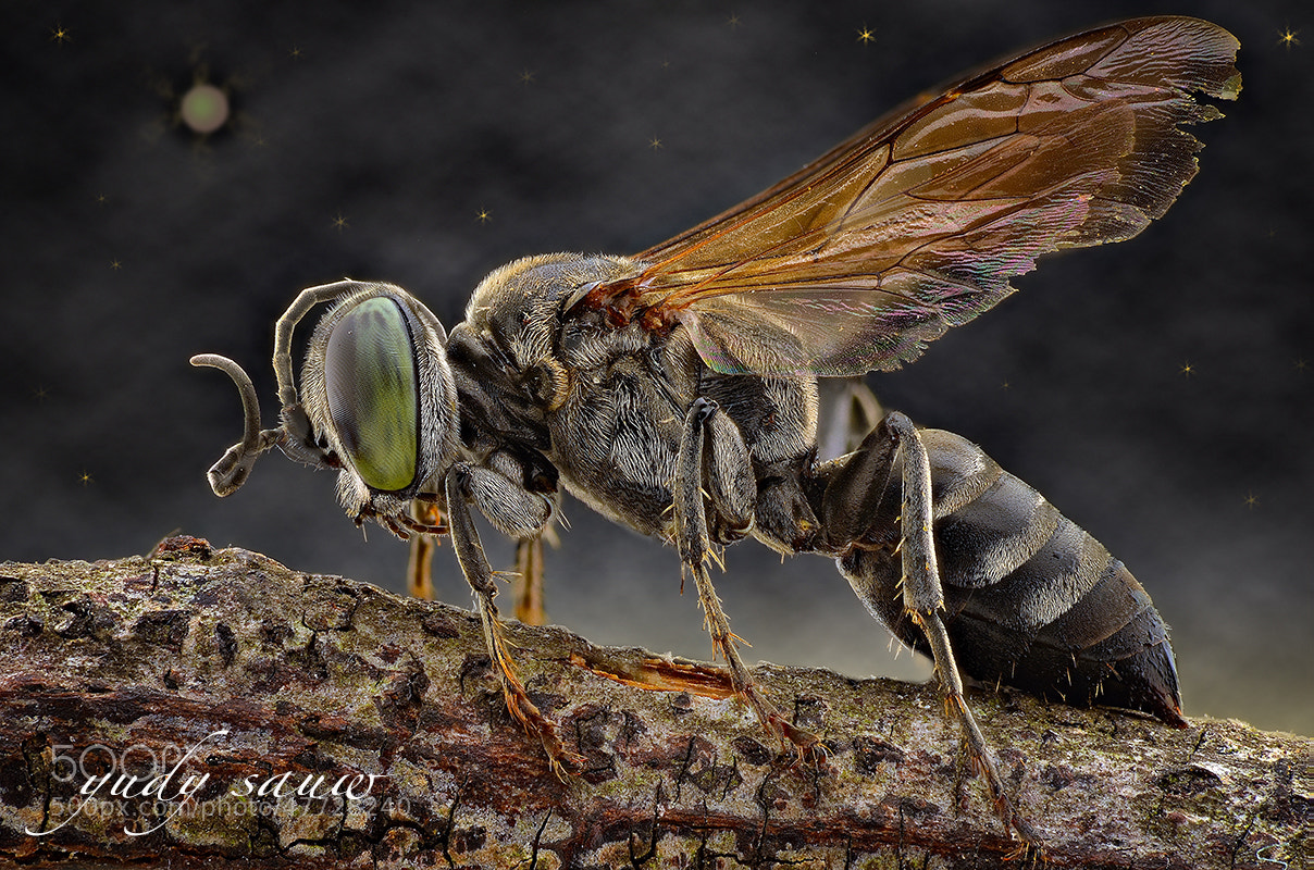 Photograph BEE by Yudy Sauw on 500px