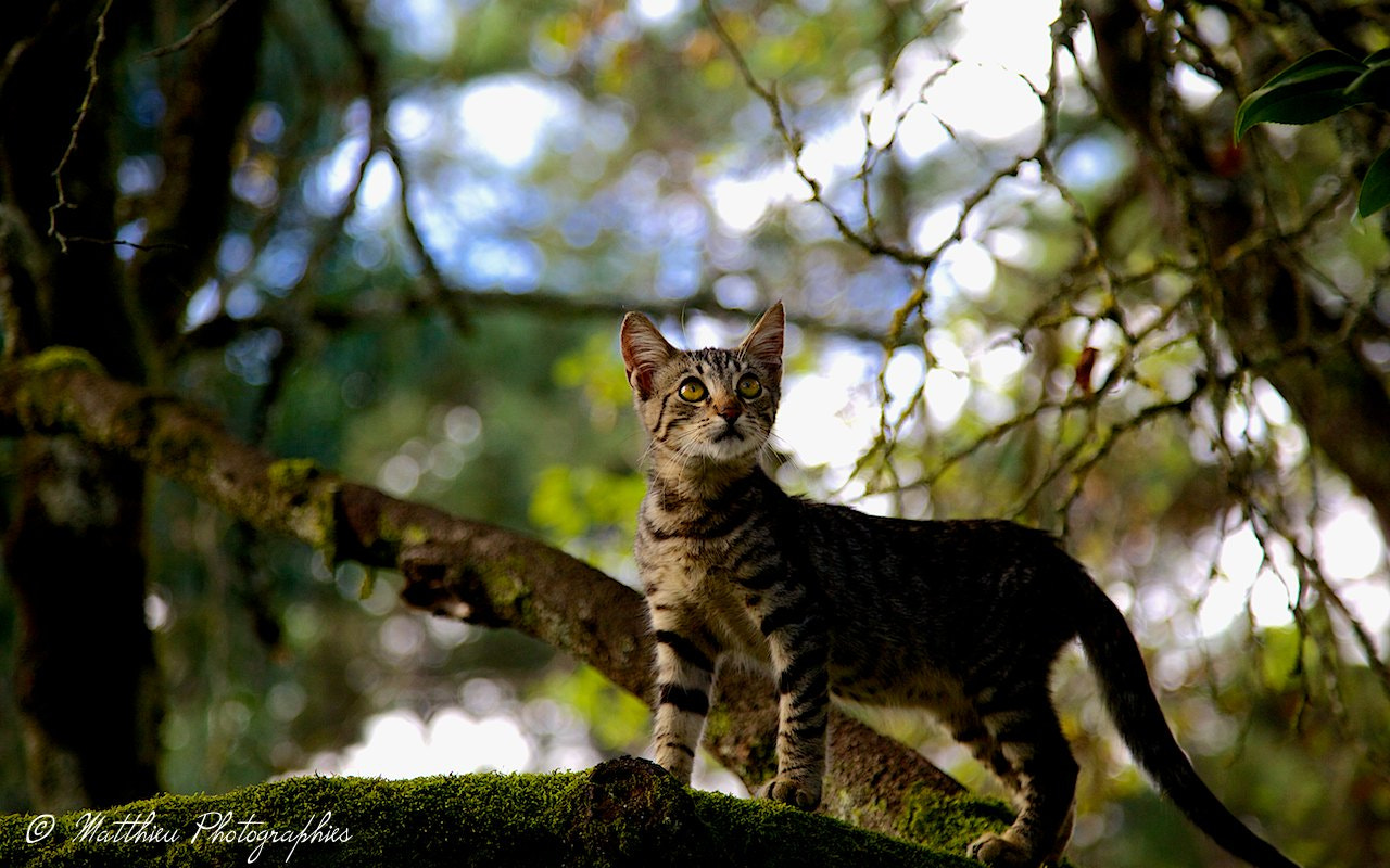 Photograph baby tiger cat by Matthieu Lucas on 500px