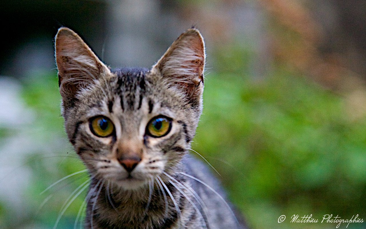 Photograph baby cat by Matthieu Lucas on 500px