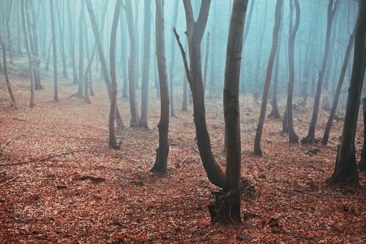 Photograph early morning fog by Andrea Hübner on 500px