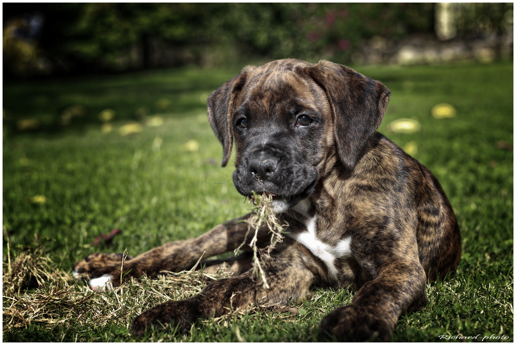 Photograph Le chiot by Richard Echasseriau on 500px