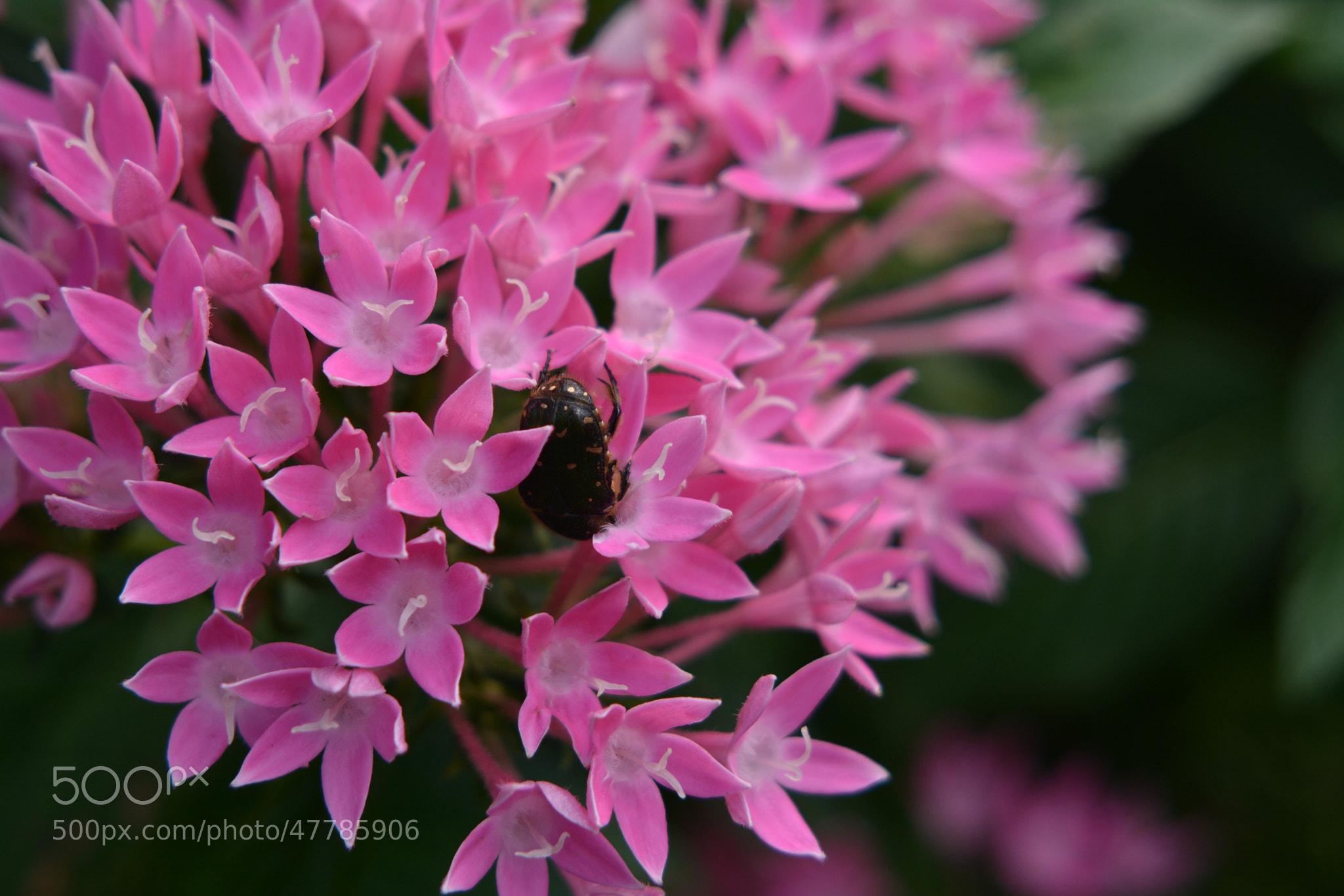 Photograph Ladybug by Eng Yap on 500px