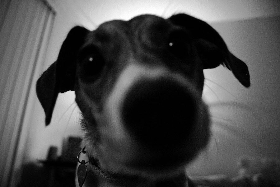 Photograph day 033 // boop by project 365  on 500px