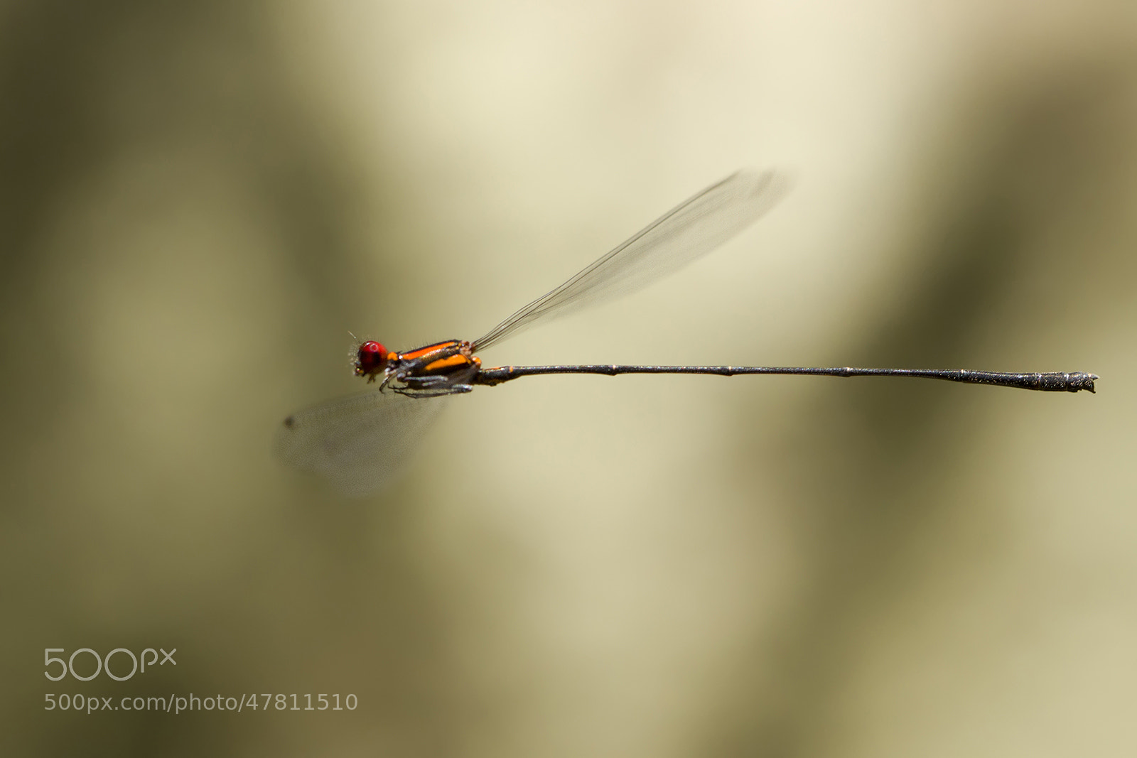 Photograph fly with me  by  Hendy Mp on 500px