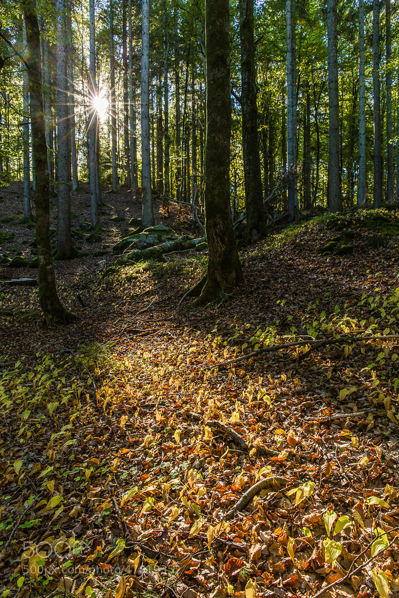 Photograph Light in the autumn woods by Hans Kruse on 500px