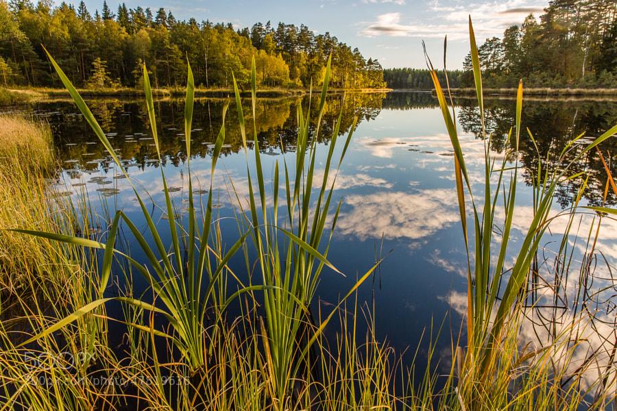 This photo was shot near Vesljunga in Northern Skåne in Sweden.