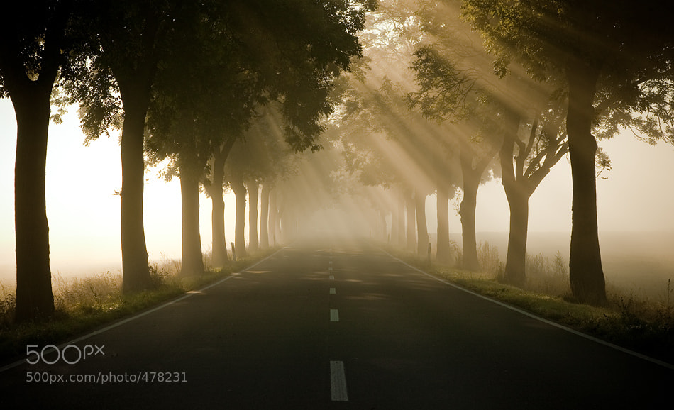 Photograph foggy by Jens  Fersterra on 500px