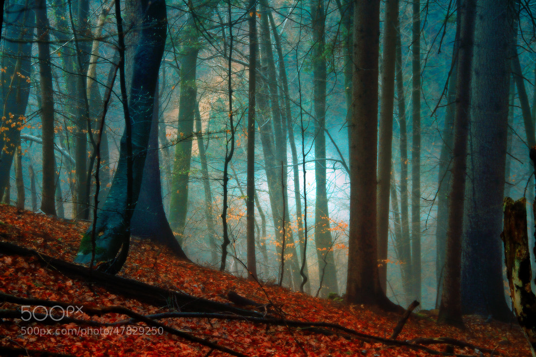 Photograph Magic in forest by Domen  Dolenc on 500px