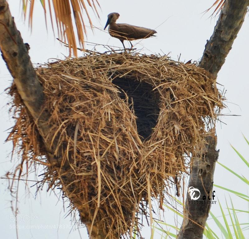 Photograph bird by Daifallah Mansour on 500px