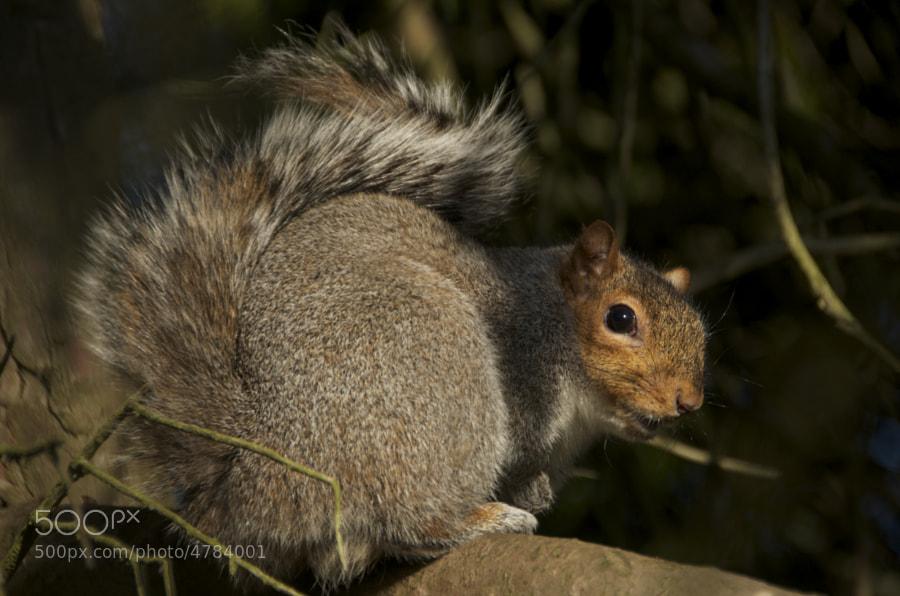 ..the squirrel!