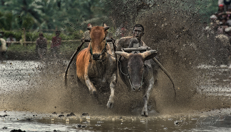 Photograph Race to the finish by Jose Hamra on 500px