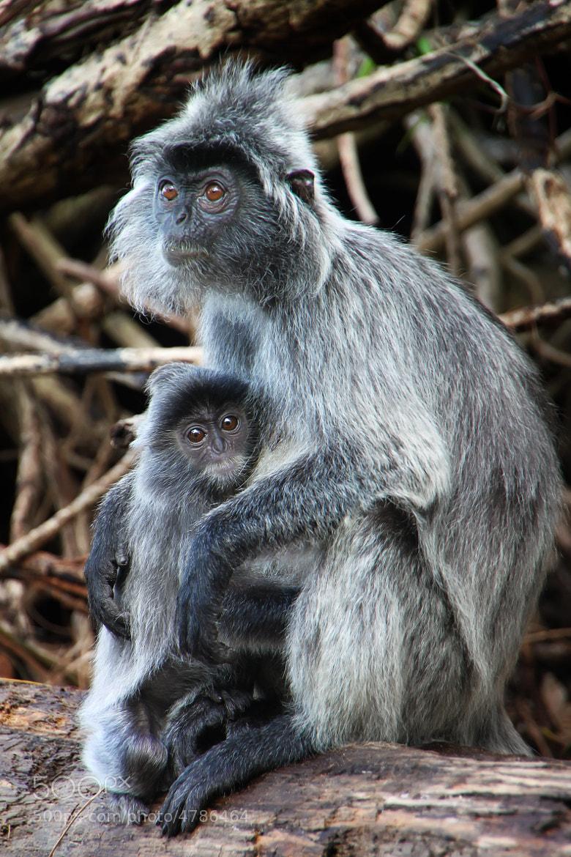 Photograph Monkey Buisness by John Blake on 500px