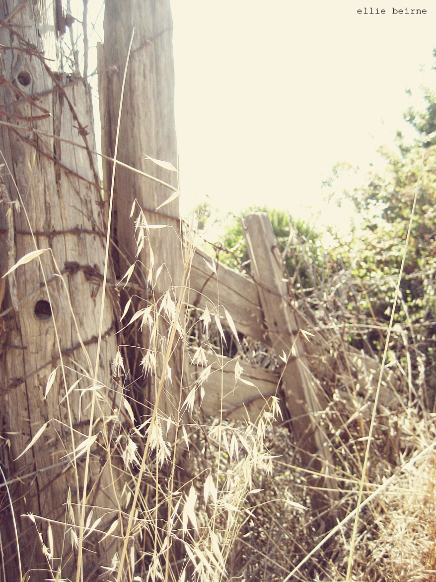 Photograph Wood and Wire by ellie beirne on 500px