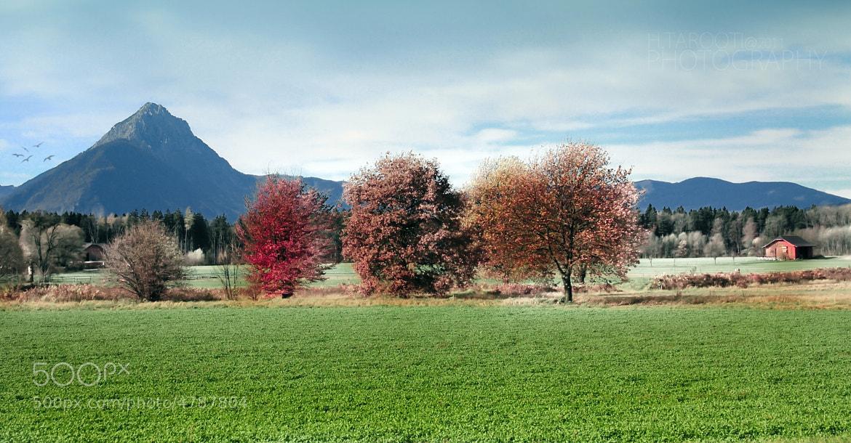 Photograph Fresh Air by Hussain Tarooti on 500px