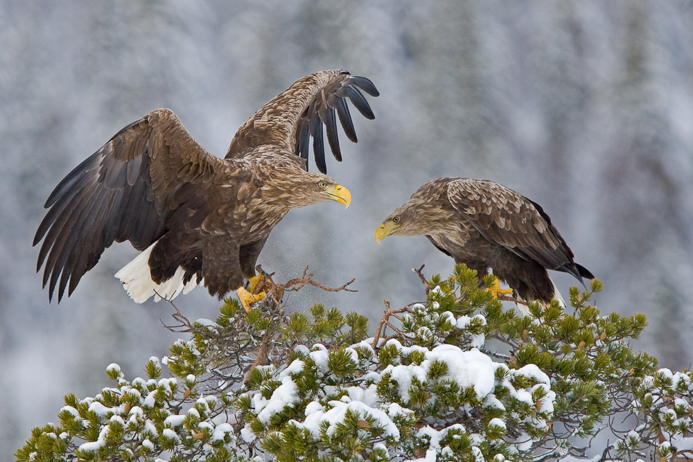 Photograph Eagle meeting by René Visser on 500px