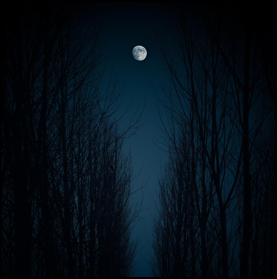Photograph Moonlight by Luis Mariano González on 500px